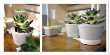 pots ciment pastel et plante verte